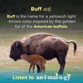 Animalogy_share_buff