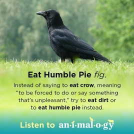 Animalogy_share_humble