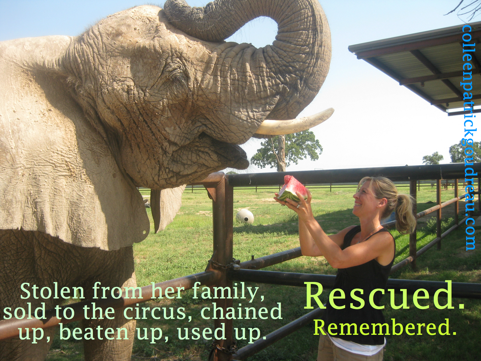 Babe was stolen as a young elephant from her family in Africa, suffered two broken legs being chained up and thrown about during transport, and was finally brought to Black Beauty Ranch where she lived out the last few years of her life.