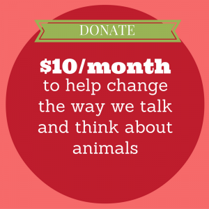 Support Animalogy